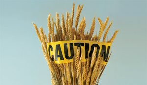 caution-wheat-628x363